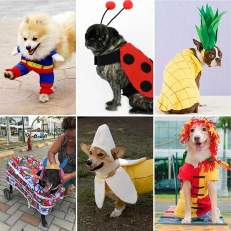 Fantasias criativas para cachorros