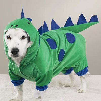fantasia de dinossauro Para Cachorro